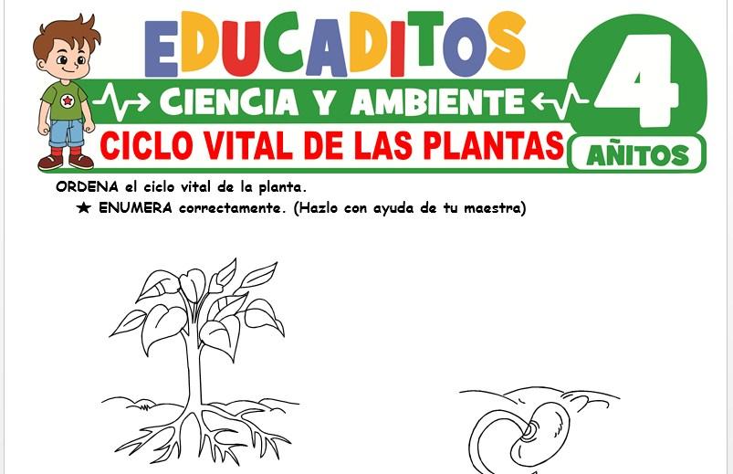 Ciclo Vital de las Plantas para Niños de 4 Años