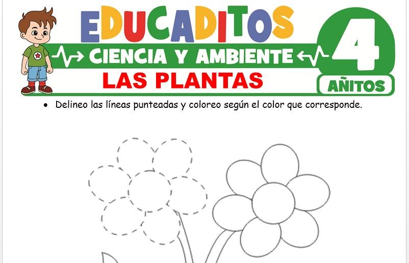 Las Plantas para Niños de 4 Años