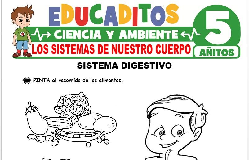 Los Sistemas de Nuestro Cuerpo para Niños de 5 Años
