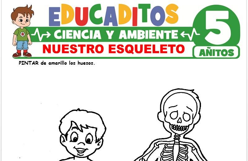 Nuestro Esqueleto para Niños de 5 Años