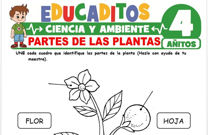 Partes de las Plantas para Niños de 4 Años